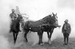 Q34105 horses crop