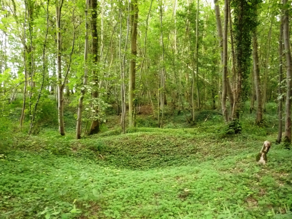 Rossignol Wood